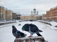 Выставка работ фотографа Елены Кенунен