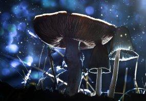 Фотосъемка грибов